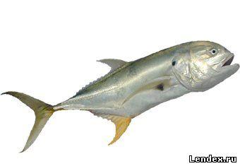 Палия (Salvelinus lepechini)