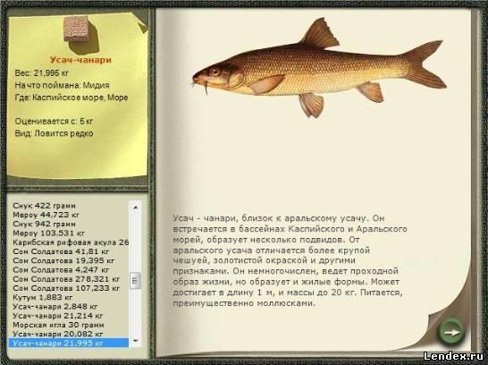 русская рыбалка прикормка для леща
