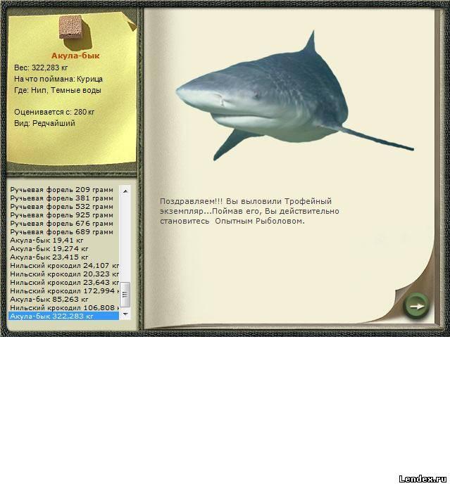 Bull shark anatomy