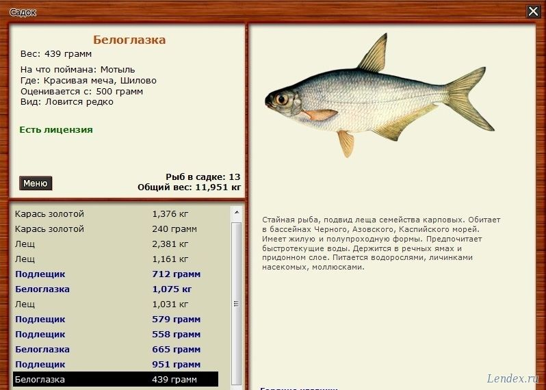 русская рыбалка 3 красивая меча голавль