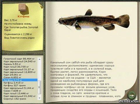 толстолобик ночью подводной охотой