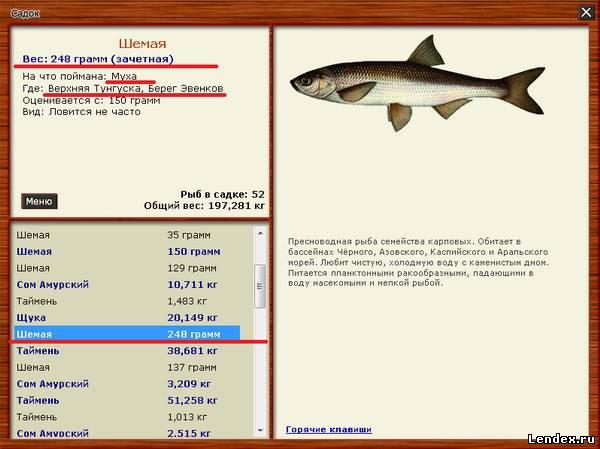 рыба которая ловит комара