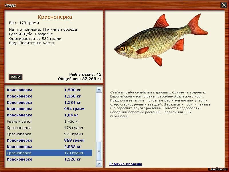 прикорм для красноперки русская рыбалка 3