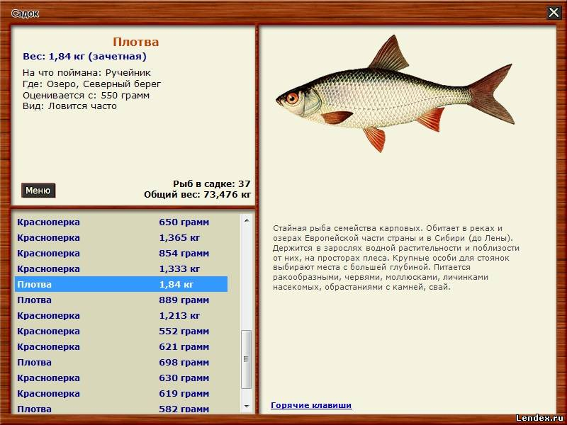 где купить живца для рыбалки плотва