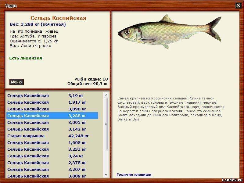 лицензия на ловлю рыбы в море