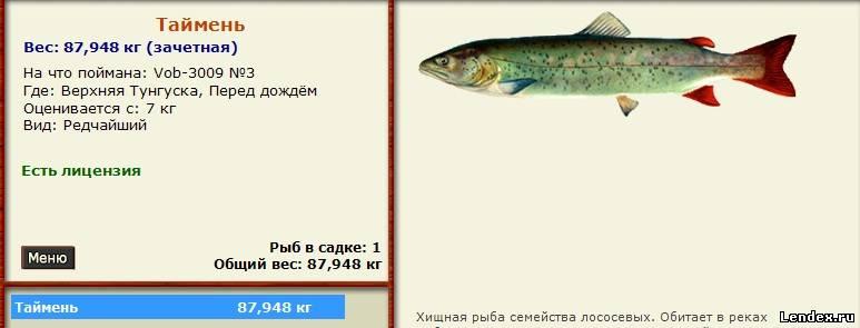 рыбалка верхняя тунгуска