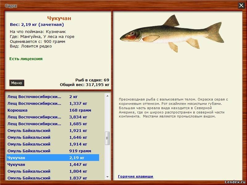 рыбалка как ловить рыбу летом и на что