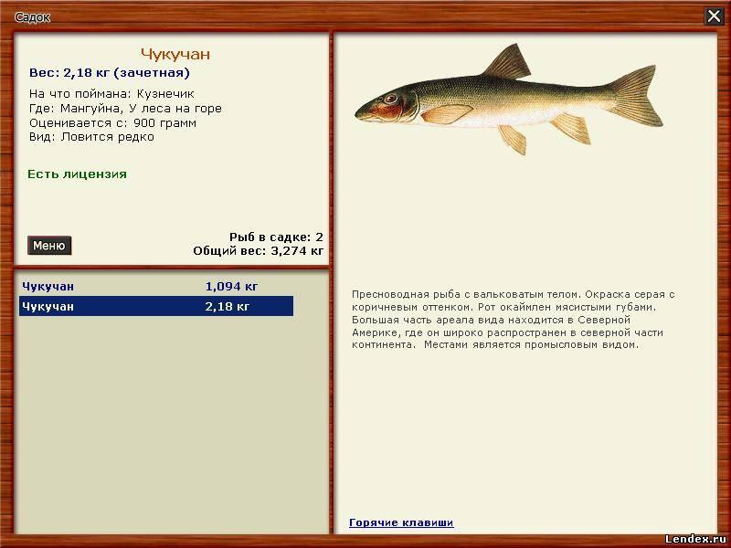 как ловить рыбу у островов на реке
