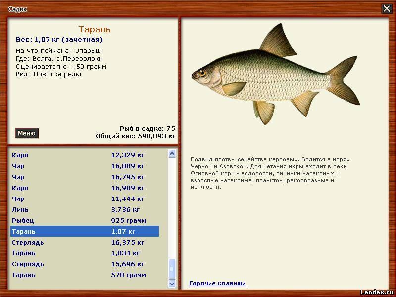 волга русская рыбалка