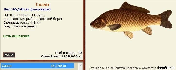 Где ловить сазана русская рыбалка