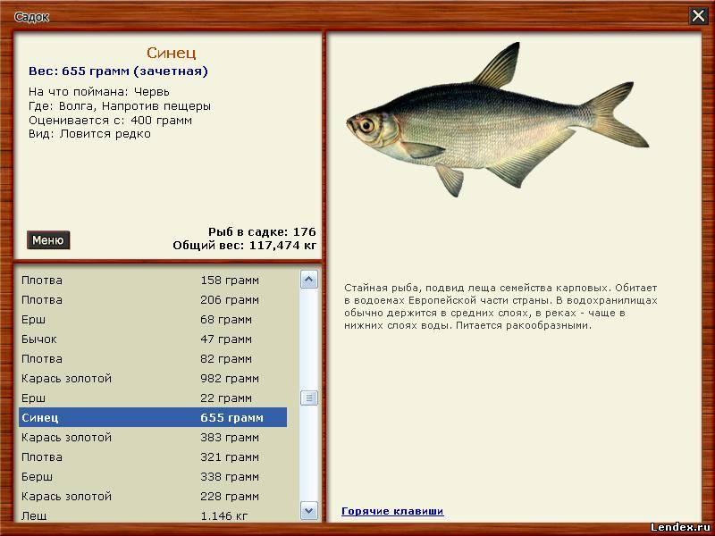 густера рыба как ловить