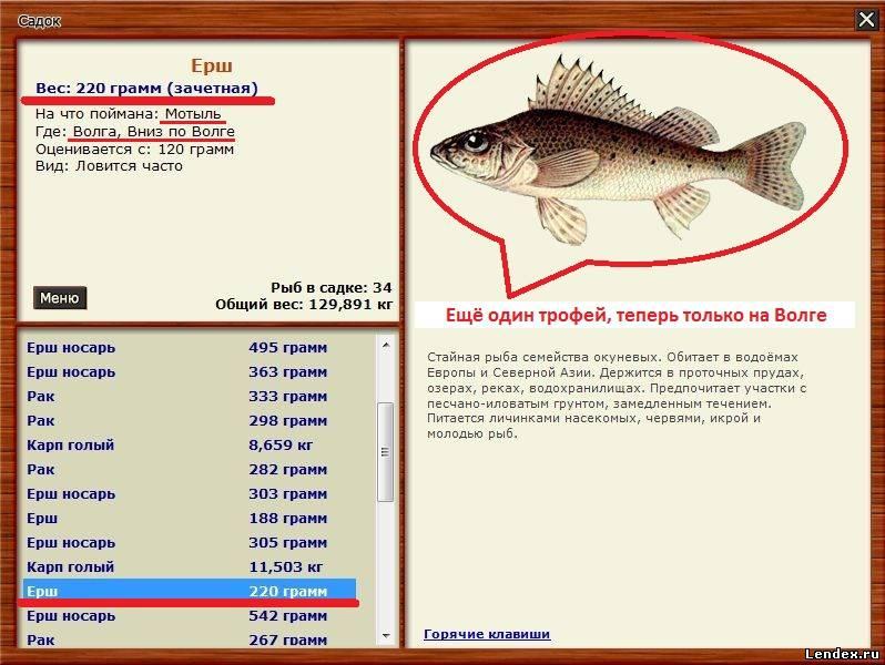 ловить трофейную рыбу