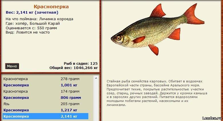 на что ловить рыбу в ростове