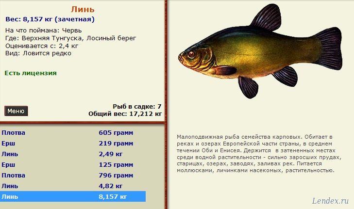 русская рыбалка 3 верхняя тунгуска линь