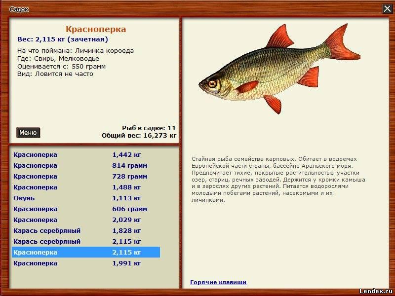 на волге какую рыбу ловят и на что