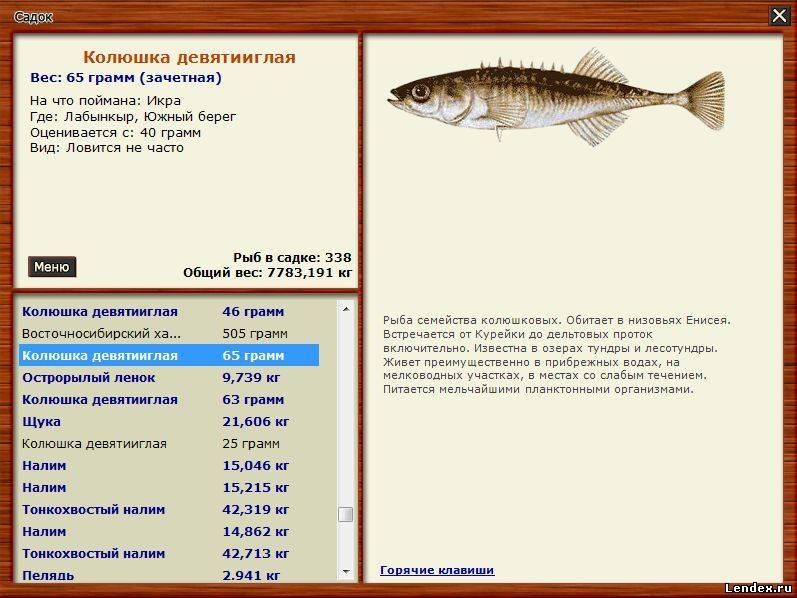 все виды рыб и способы их ловли