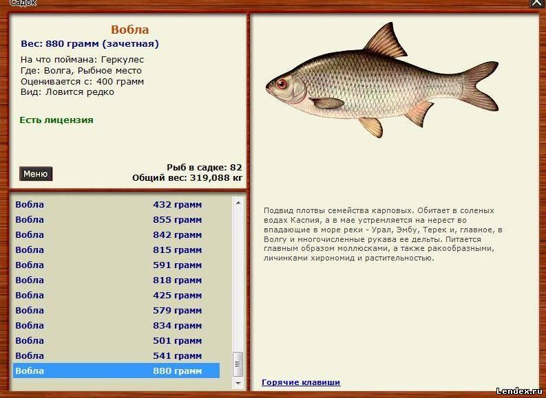 какая рыба в волге и на что клюет