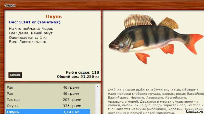 в какое время и какую рыбу нужно ловить