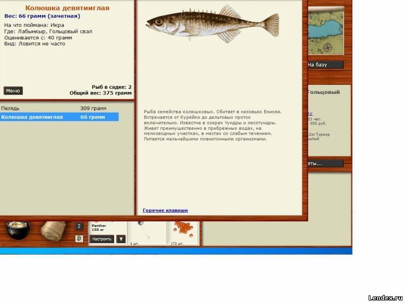 русская рыбалка колюшка девятииглая