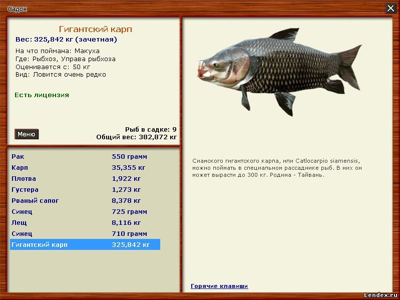 чем ловят крупную рыбу