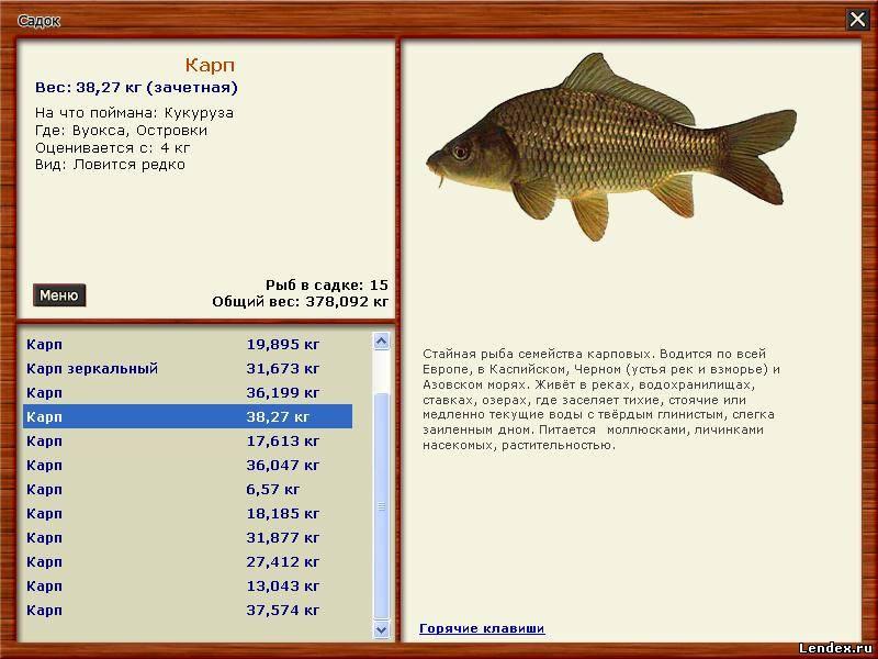 Игра русская рыбалка вуокса