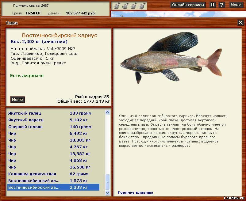 колюшка рыба на что ловить