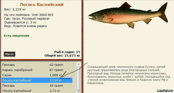 лосось каспийский рыбалка