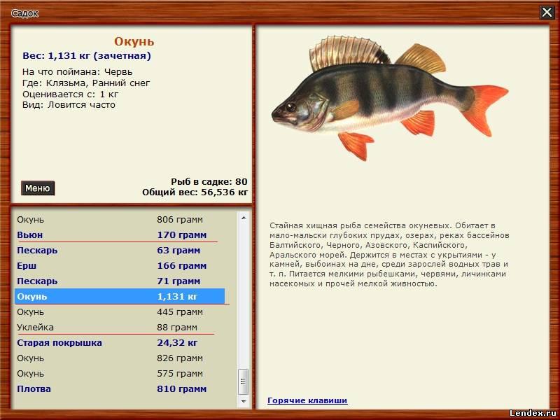 русская рыбалка клязьма