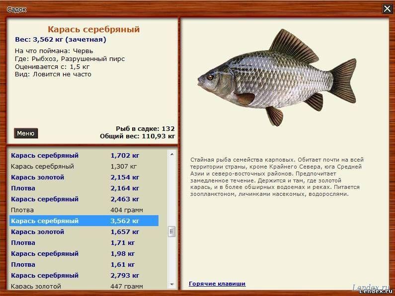 клев рыбы рыбхоз