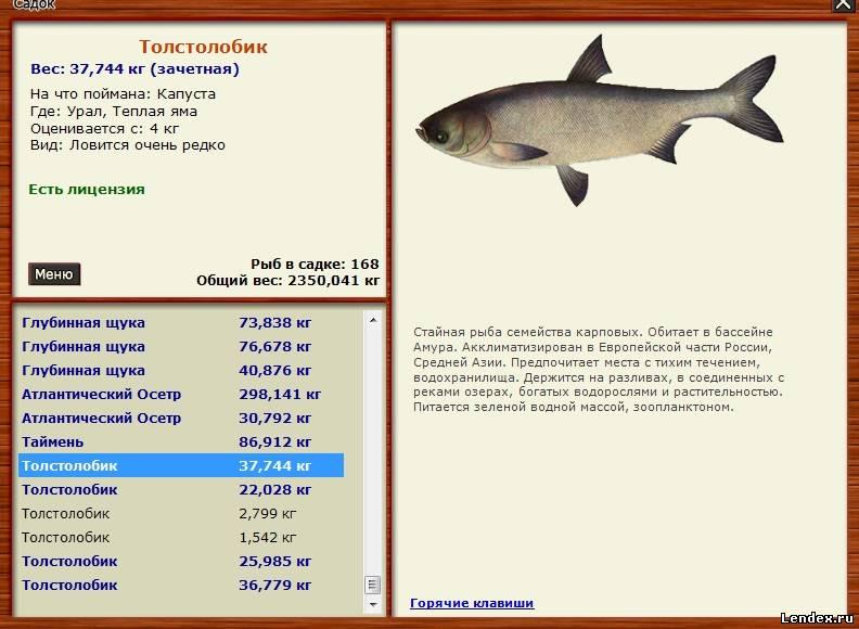 толстолобик трофейная рыбалка