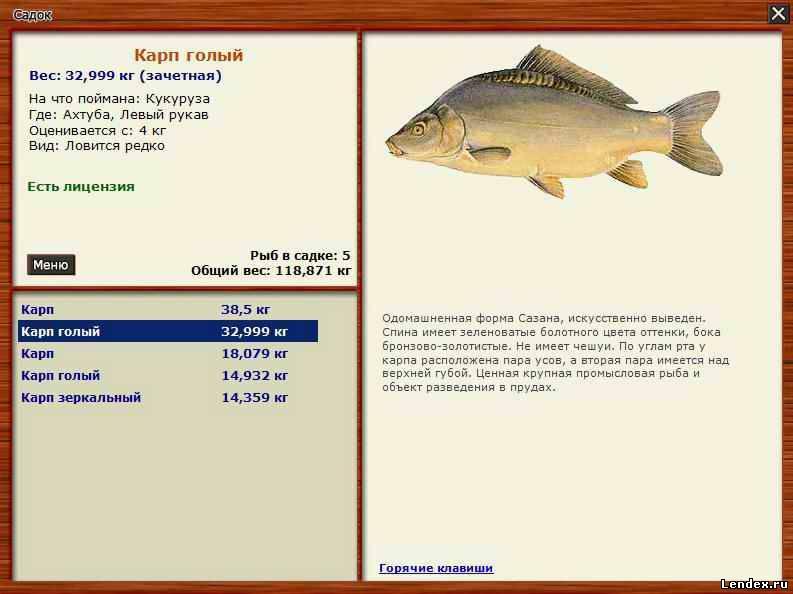 как ловить крупную рыбу и на чем