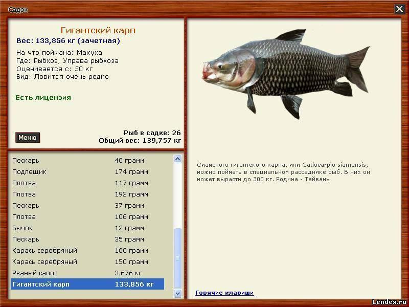 рыбхоз константиново сиамский карп на что ловить