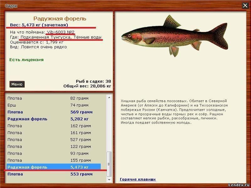 на что клюет рыба форель
