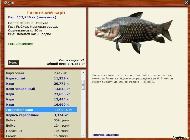 всадников ловят рыбу