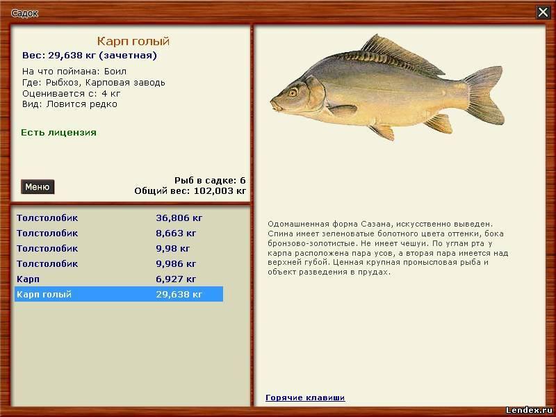 где ловить карпа на озере русская