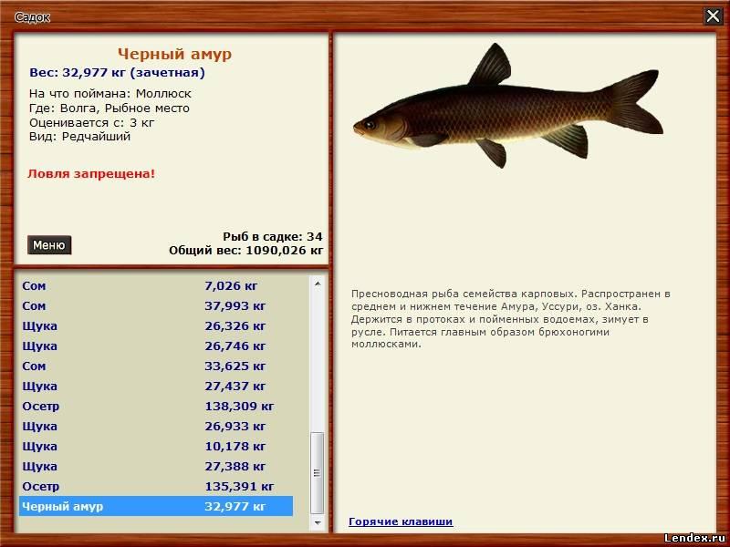 какая рыба клюет или