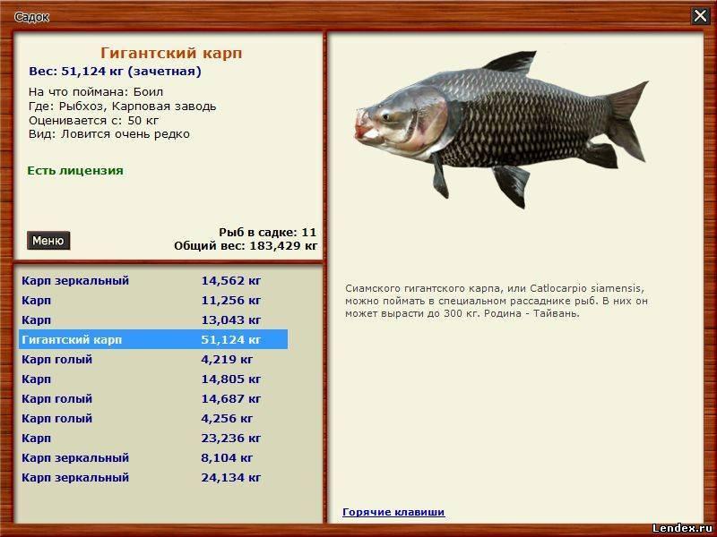 на какой глубине надо ловить рыбу
