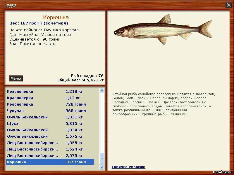 какая рыба клюет на кусочки рыбы