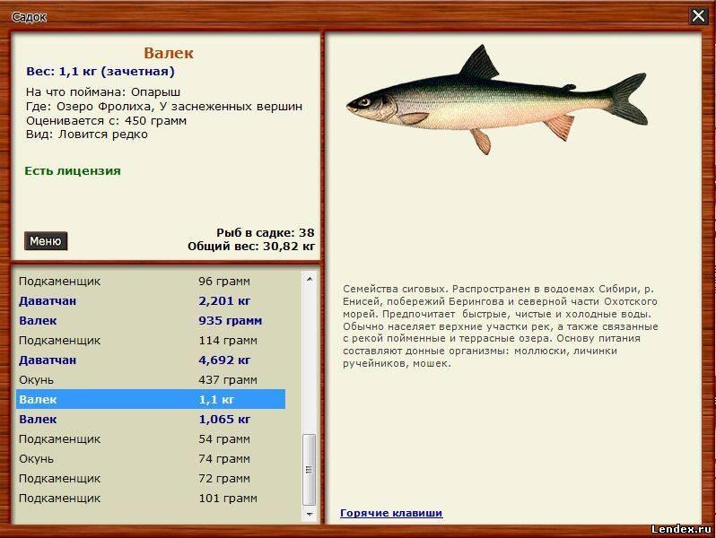 толстолобик рыбное место в контакте