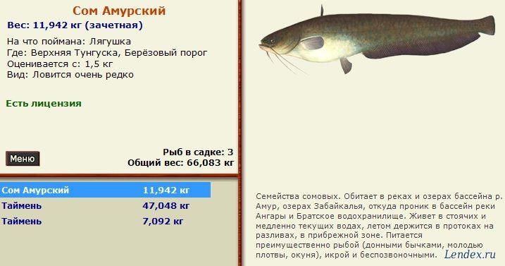 прикорм рыбы перед рыбалкой