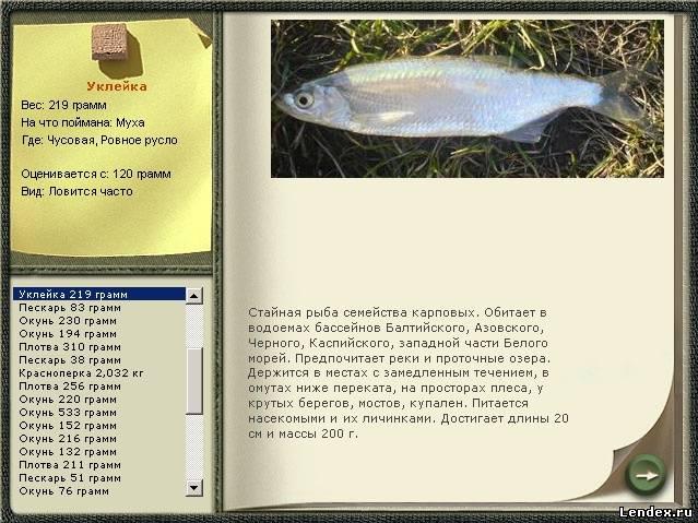 как можно поймать рыбу на озере
