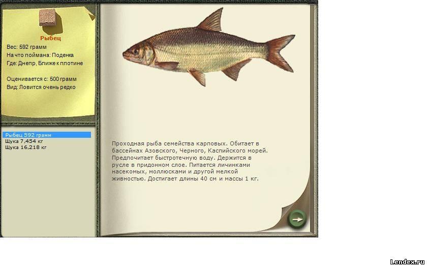 лучшая прикормка для рыбы
