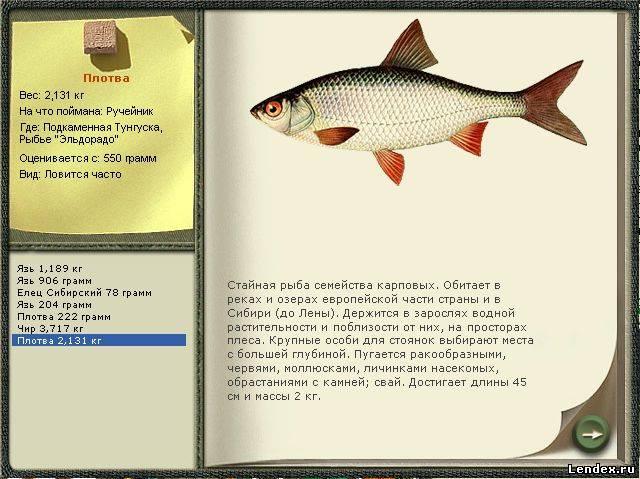 что добавить в прикормку для рыбы рецепт