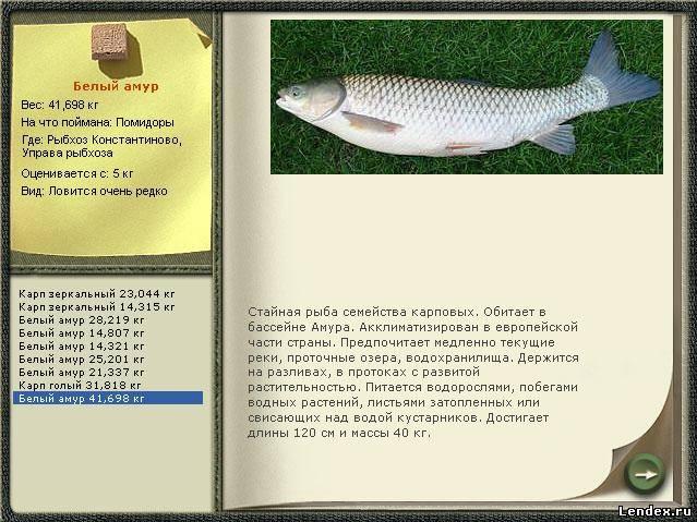 на что ловить белый амур рыба