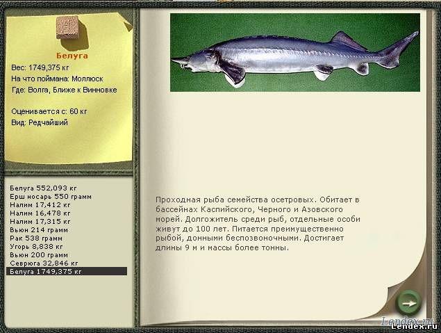 Урал белуга