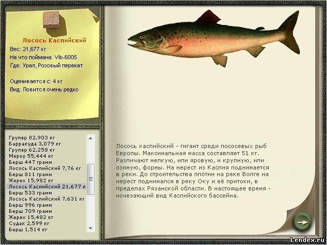 почему рыб тянет к весам работника
