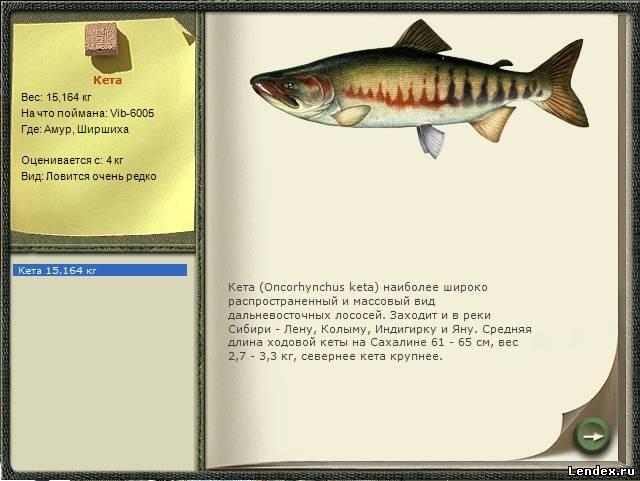 на что ловить лосось кету
