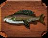 Лабынкырский хариус (Thymallus pallasi)